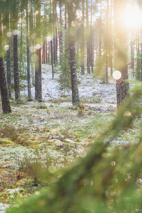 Winter day in lichen rich pine forests, near Vangaži, Vidzeme, Latvia Ⓒ Davis Ulands   davisulands.com (Davis Ulands/Ⓒ Davis Ulands   davisulands.com)
