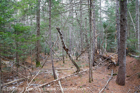 Remnants of the old railroad bed in Albany, New Hampshire. This was a logging railroad in operation from 1906-1916. Parts of the railroad bed are still visible today.
