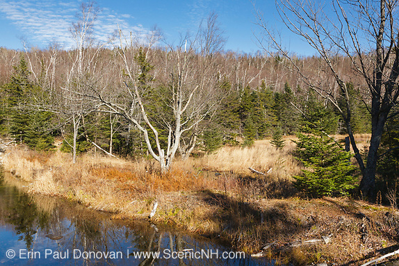 "Wetlands area along Flat Mountain Pond Trail in the Sandwich Range Wilderness of Waterville Valley, New Hampshire. This trail follows the old Beebe River Railroad (1917-1942), and this area was referred to as the ""Horseshoe"", which was a very sharp turn along the railroad near logging Camp 9."