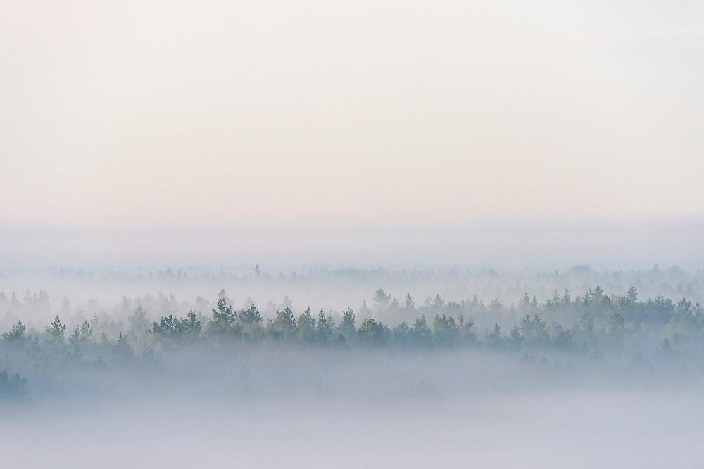 The tree tops poking out of thick fog laying over narrow forest hills and hidden bogs, Tīreļpurvs, Latvia Ⓒ Davis Ulands | davisulands.com (Davis Ulands/Ⓒ Davis Ulands | davisulands.com)