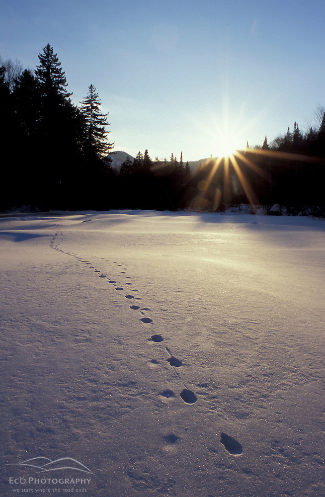 Animal tracks traverse a snow-covered Ammonoosuc River at sunset.  White Mountains. Carroll, NH (Jerry and Marcy Monkman)