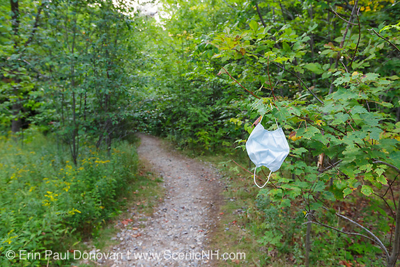 2020 human impact, mask hanging from a tree along the Georgiana Falls Path in Lincoln, New Hampshire during the summer of 2020 (COVID-19 pandemic).