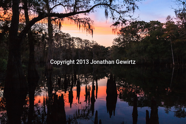 Sunset and forest reflections play on silhouetted cypress knees near the shore of the lake at Ingram Crossing on Fisheating Creek in Florida's Fisheating Creek Wildlife Management Area. WATERMARKS WILL NOT APPEAR ON PRINTS OR LICENSED IMAGES. (Jonathan Gewirtz   jonathan@gewirtz.net)