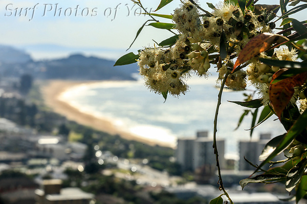 $45.00, 29 April 2021, North Narrabeen, Dee Why sunrise, @mrsspoy, Surf Photos of You, @surfphotosofyou, @mattycattle. (SPoY)