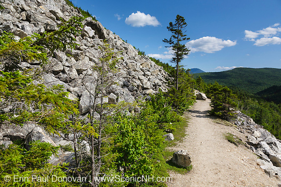 Zealand Notch  - Scenic views along the Appalachian Trail (Ethan Pond Trail) during the summer months in the White Mountains, New Hampshire USA. This trail follows the old Zealand Valley Railroad bed, which was a logging railroad in operation from 1884-1897.