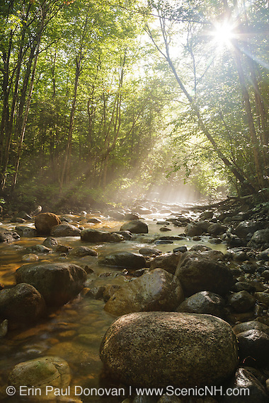 Sun rays break through forest along Cedar Brook in the Pemi Wilderness of Lincoln, New Hampshire during the summer months.