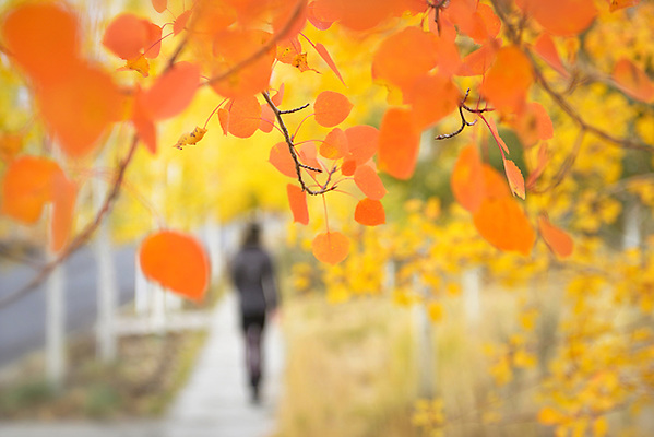 Woman sillouette walking in Nortwest Crossing with foliage on walkway in Bend,Oregon,USA Model release 00373 (Christian Heeb)