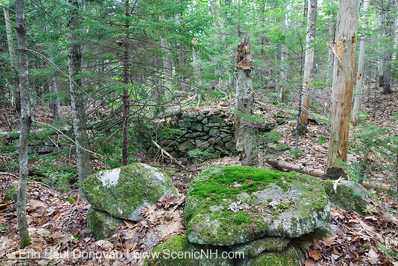 The Andrew Munsey Place home site cellar hole along Sandwich Notch Road in New Hampshire.