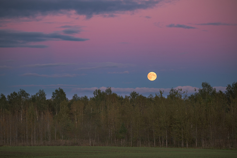 Harvest moon and agricultural landscape with young birch stands in back in late evening in autumn, Vidzeme, Latvia Ⓒ Davis Ulands | davisulands.com (Davis Ulands/Ⓒ Davis Ulands | davisulands.com)