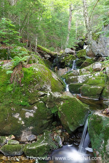 Elephant Head Brook in Carroll, New Hampshire during the summer months.