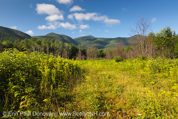 Photo Monitoring - Regrowth (foreground) of forest three months after a controlled burn in the White Mountains, New Hampshire.