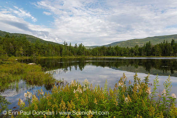Lily Pond during the summer monhts. This pond is located along the Kancamagus Highway (route 112), which is one of New England's scenic byways. Located in the White Mountains, New Hampshire.