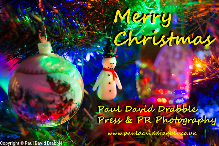 Christmas Tree 20 December 2016 Copyright Paul David Drabble www.pauldaviddrabble.co.uk (Paul David Drabble)