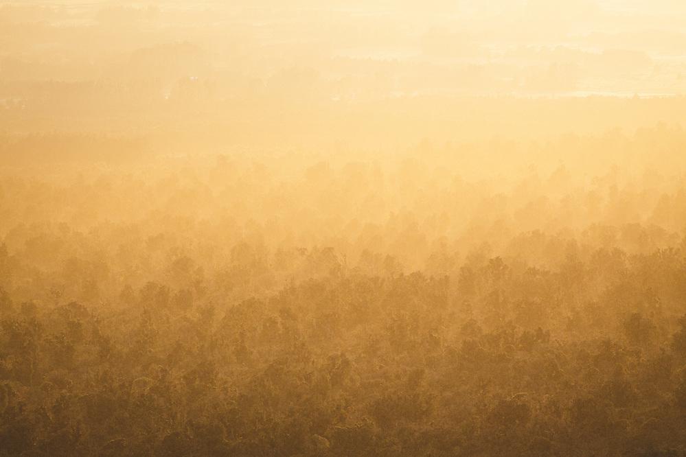 Sunlight shines through the rising fog over beech forests on sloping side of Mount Taranaki, Egmont National Park, New Zealand Ⓒ Davis Ulands | davisulands.com (Davis Ulands/Ⓒ Davis Ulands | davisulands.com)
