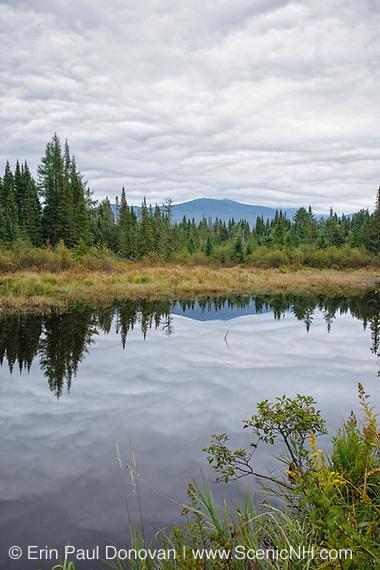 Wetlands area along Beaver Brook in Bethlehem, New Hampshire.