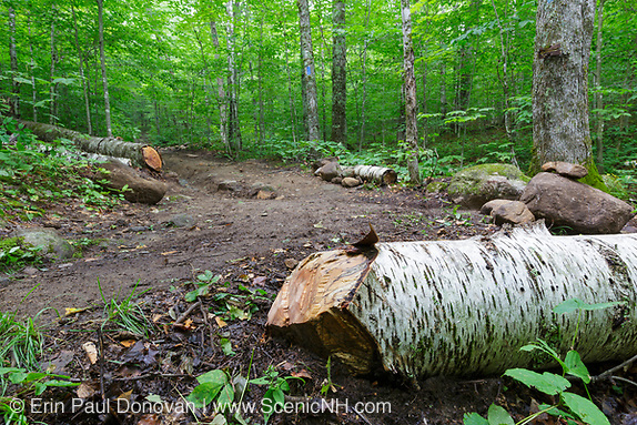 Low impact trail work for National Trails Day - Freshly cut blowdown along the Mt Kinsman Trail in the White Mountains, New Hampshire.