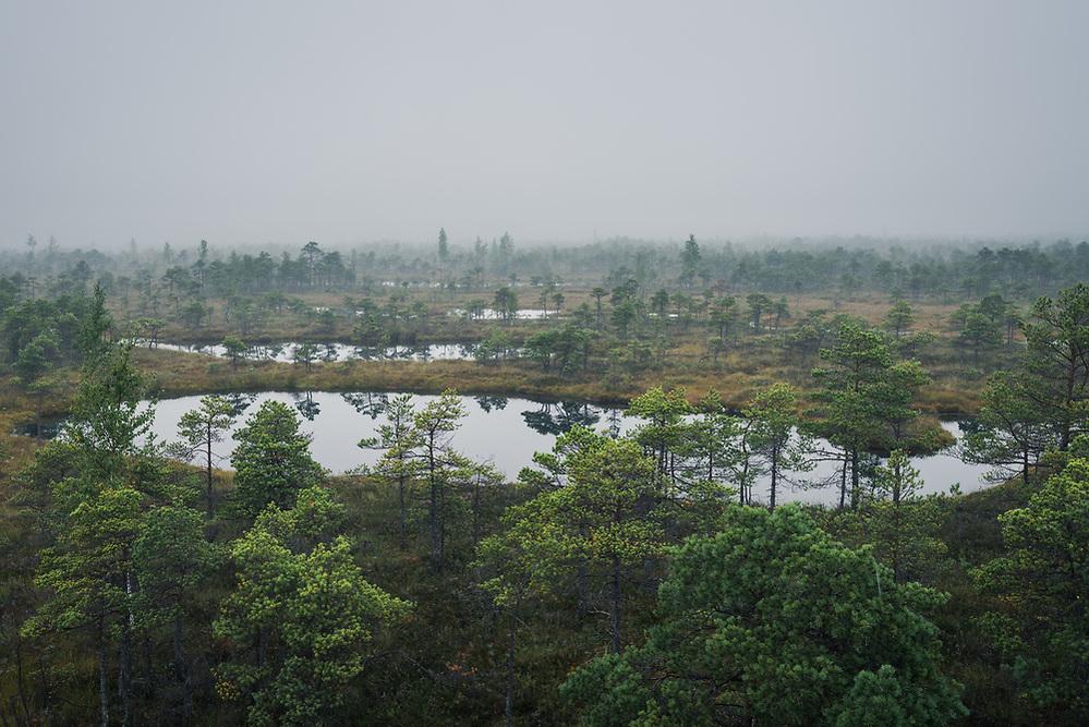 Fog and low clouds over raised bog landscape with scots pines and occasional bog pool, Kemeri National Park (Ķemeru Nacionālais parks), Latvia Ⓒ Davis Ulands | davisulands.com (Davis Ulands/Ⓒ Davis Ulands | davisulands.com)