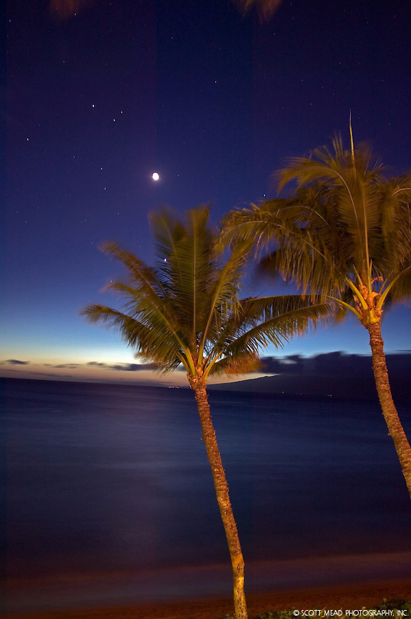 Palms Trees at twilight, view of moon and ocean, Kaanapali, Maui,Hawaii (Scott Mead)