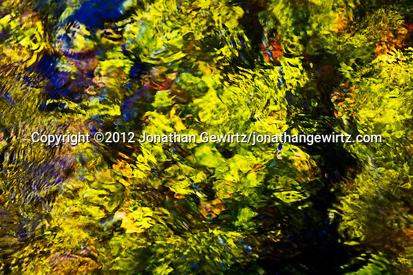 Bright green plants form a colorful abstract background beneath the surface of a stream that crosses the Anhinga Trail in Everglades National Park, Florida. (© 2012 Jonathan Gewirtz / jonathan@gewirtz.net)