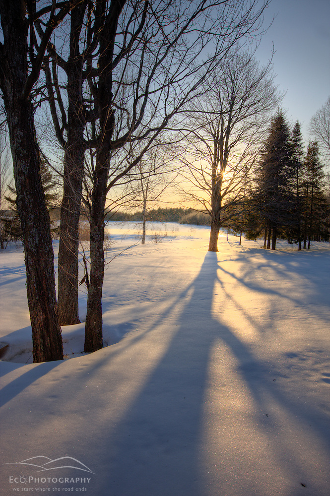 Trees, snow, and shadows at Medawisla Wilderness Camps near Greenville, Maine. Winter. (Jerry and Marcy Monkman)
