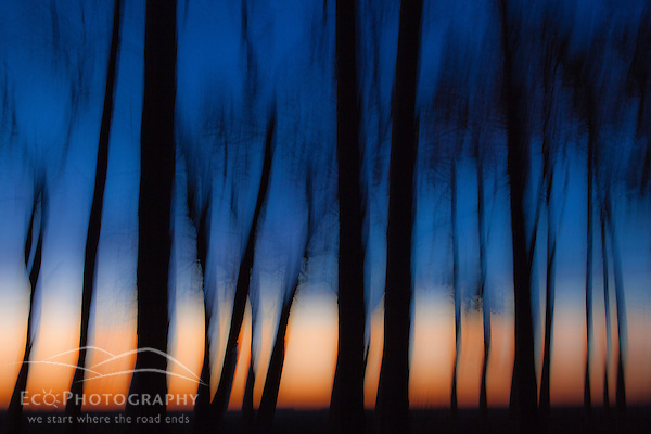 Trees silhouetted against the morning sky at Odiorne Point State Park in Rye, New Hampshire. (Jerry and Marcy Monkman)