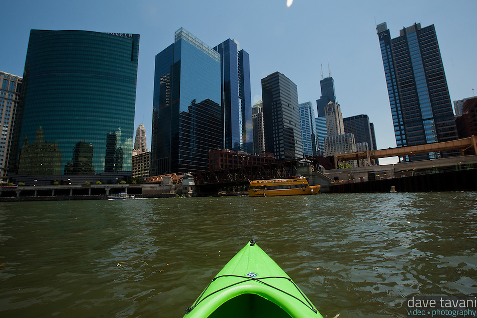 My kayak points toward the Chicago skyline with the Sears Tower toward the right at the meeting of the north and south branch of the Chicago River. (Dave Tavani)