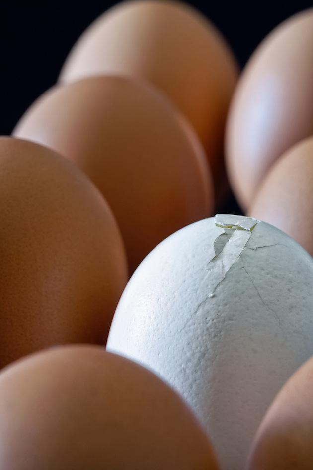 Image of brown eggs with dark background surrounding a white broken egg. (Janice Sullivan)