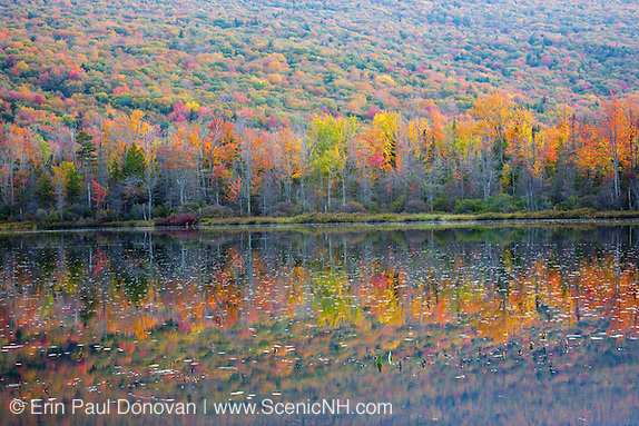Elbow Pond during the autumn months in Woodstock, New Hampshire. Species of fish in this pond include chain pickerel, yellow perch and smallmouth bass. This area was part of the Gordon Pond Railroad, which was a logging railroad in operation from 1905 - 1916.