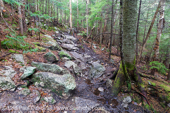 An area along the Mt. Tecumseh Trail in Waterville Valley, New Hampshire during the spring of 2017 that is in desperate need of drainage work. Over the last six years, there has been over a quarter of a mile of stonework done on this trail, and this high priority area has been ignored. Trail maintenance organizations say high priority areas of a trail are first and foremost.