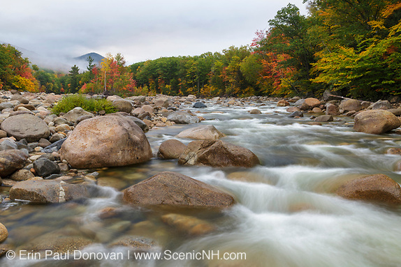 Autumn foliage along the East Branch of the Pemigewasset River in Lincoln, New Hampshire on a cloudy and foggy autumn morning. This location is just above the site of the old 1900s Gravity Dam that was linked to the Lincoln Mill era.