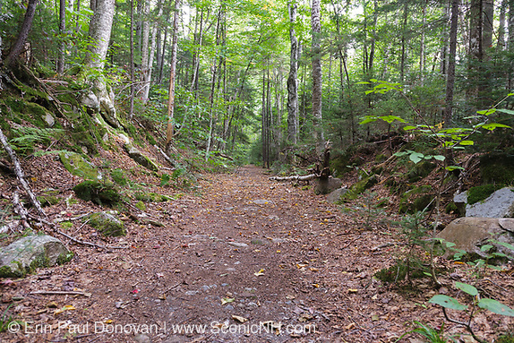 Franconia Brook Trail during the summer months. This trail follows the railroad bed of the old East Branch & Lincoln Railroad that traveled through this area. The EB&L was a logging railroad in the state of New Hampshire that was owned by James E. Henry.