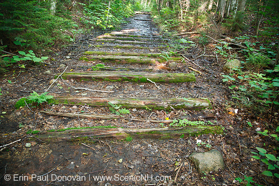 Old railroad ties along Cedar Brook Trail from the East Branch & Lincoln Railroad in the Pemi Wilderness of Lincoln, New Hampshire. This was a logging railroad in operation from 1893-1948. It was built by James E. Henry.