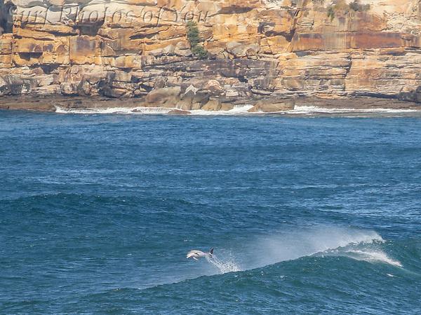 $45.00, 7 September 2021, North Narrabeen, Long reef Bombie, Makaha Foil, Surf Photos of You, @surfphotosofyou, @mrsspoy ($45.00, 7 September 2021, North Narrabeen, Long reef Bombie, Makaha Foil, Surf Photos of You, @surfphotosofyou, @mrsspoy)