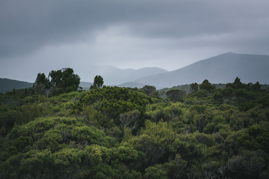 The Southern Circuit | Stewart Island - Rakiura, New Zealand (Davis Ulands/Ⓒ Davis Ulands | davisulands.com)