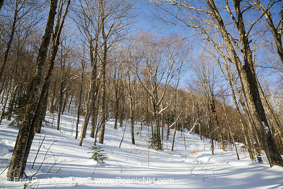 Hardwood forest on the northern slopes Mount Waternomee in Kinsman Notch of Woodstock, New Hampshire during the winter months.
